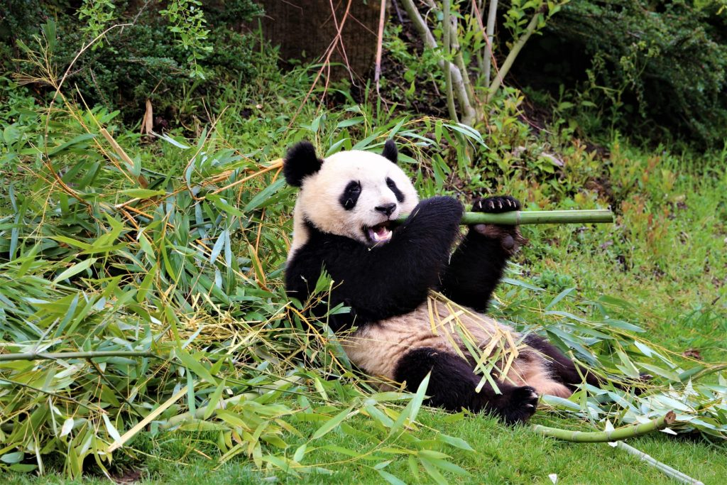 北京動物園 日数 観光 北京 滞在時間